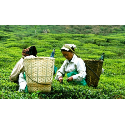 Clipper Fairtrade Teas for Cafes Restaurants Hotels and Offices