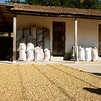Colombia Wholesale Coffee Beans Farm