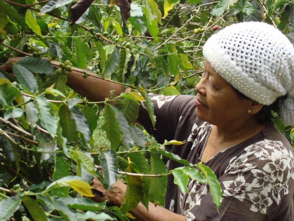 Fairtrade Fresh Coffee Beans