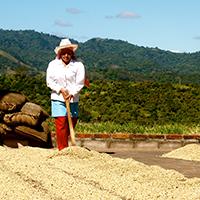 Salvador Coffee Farm
